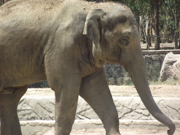 animals should not be kept in zoos persuasive essay