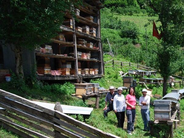 Beekeeping in Macahel