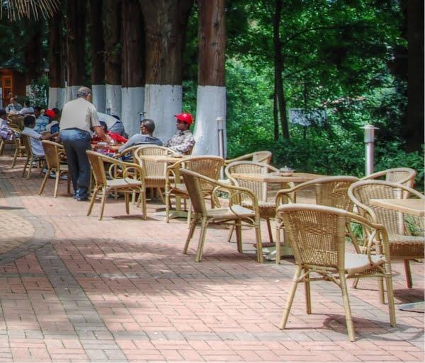 Rize tea garden