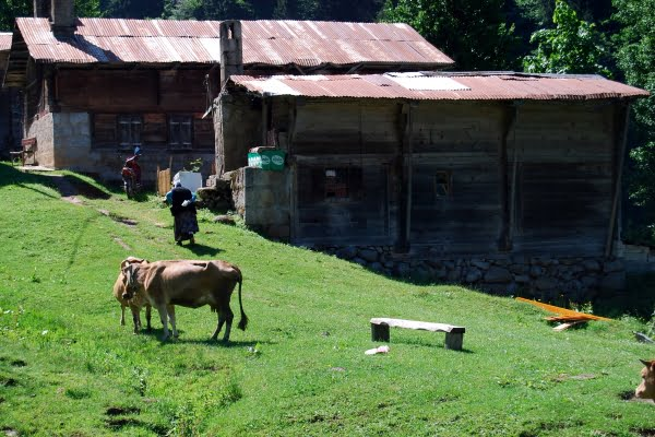 Locals of the ayder plateau