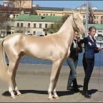 Hoax : The Most Beautiful Horse in the World Does NOT Live in Turkey