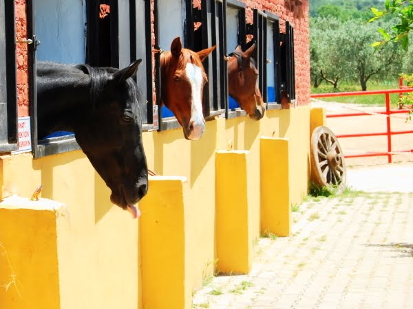 Degirmen Horse Ranch