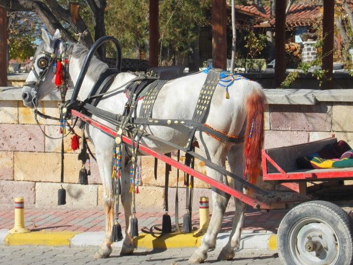 Working horse of Cappadocia