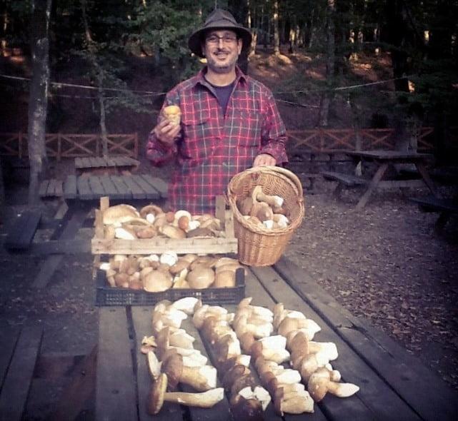 Mushroom hunt and picnic istanbul