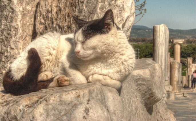 Cats of Ephesus Turkey