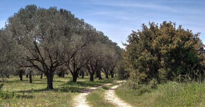 path from Miletus