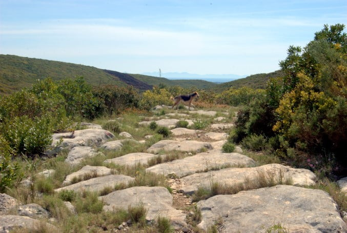 Sacred path of Miletus