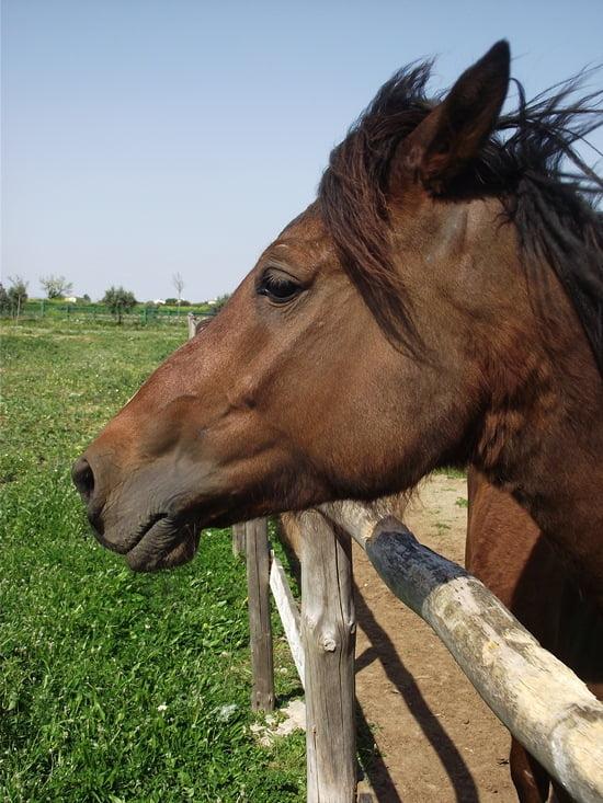 Horses of Turkey