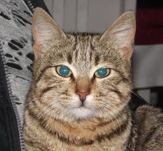 cats of Turkey