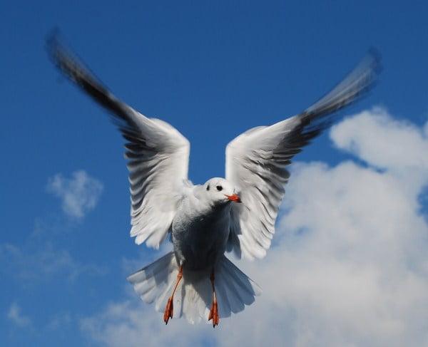 Photo of a Bird in Flight