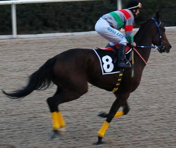 horse racing in Turkey