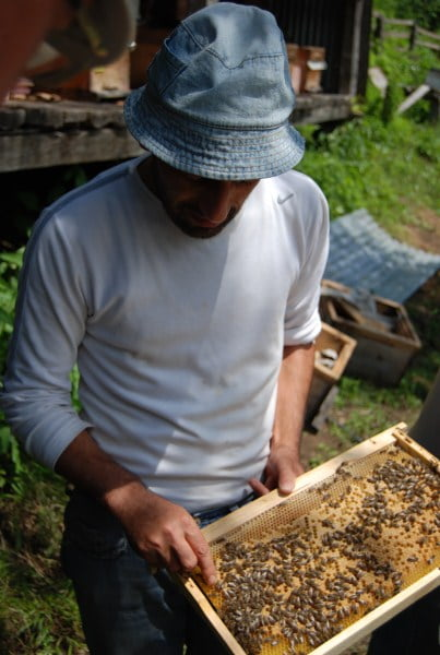 beekeeping in Turkey