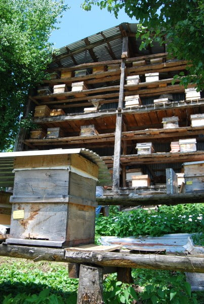 Collection of bee hives
