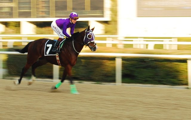 Izmir horse races