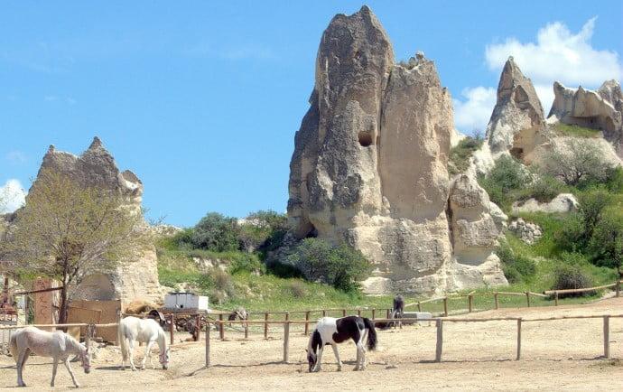 Horses of Cappadocia