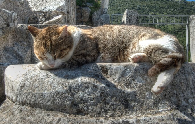 Ephesus cats
